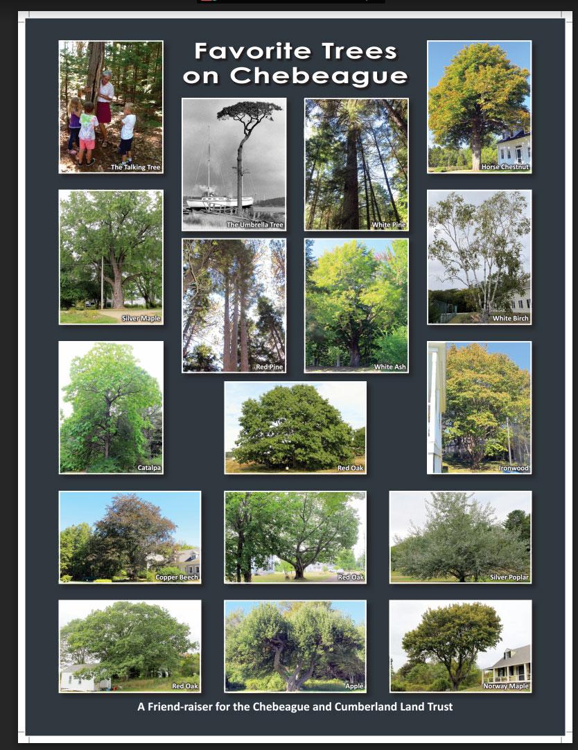 Favorite Trees